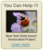 NY State Insect Restoration Project